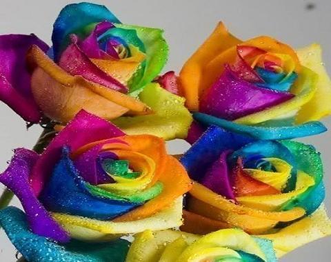 Significados de los colores de las rosas - Significado de los colores de las rosas ...