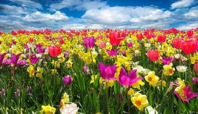 efectos-de-la-primavera-en-el-estado-de-animo