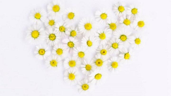flores-y-cartas-de-amor