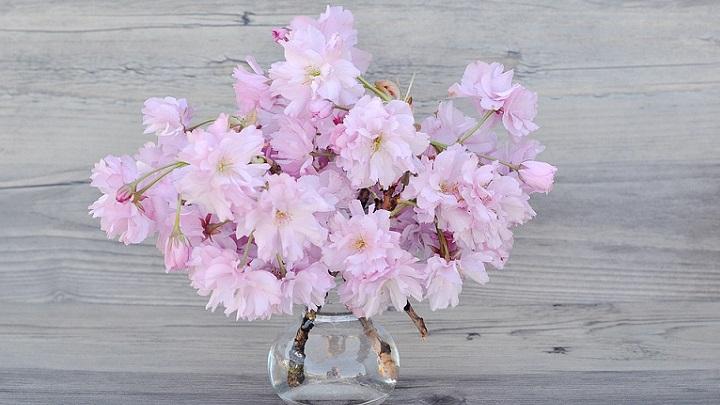 lenguaje-de-las-flores