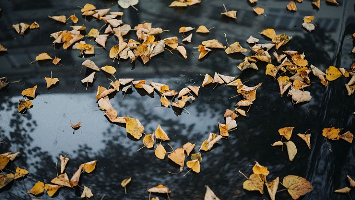 hojas-con-forma-de-corazon